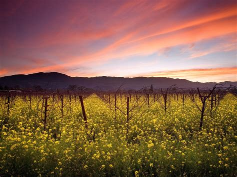 Photo Napa Valley by Holistic Flow Retreat With Travis And