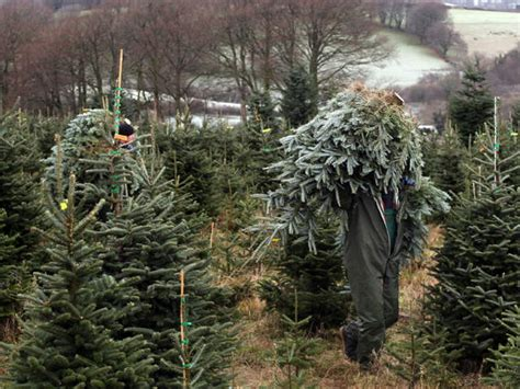 recycle your christmas tree at more than 30 southern