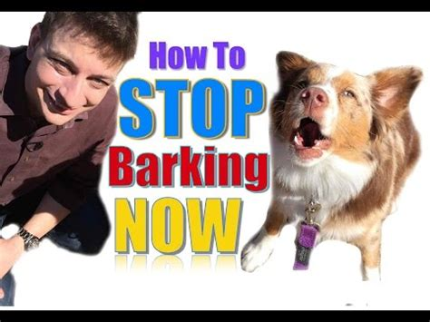 how do you a not to bark how to teach your to roll and quot play dead quot fast vidoemo emotional unity