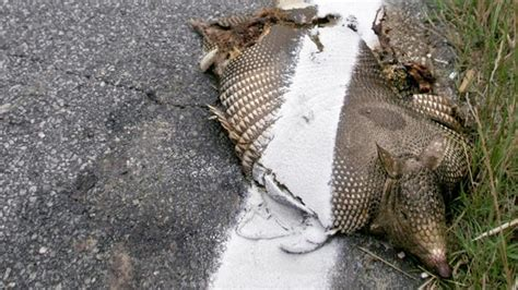 texas candidate legalize road kill  food