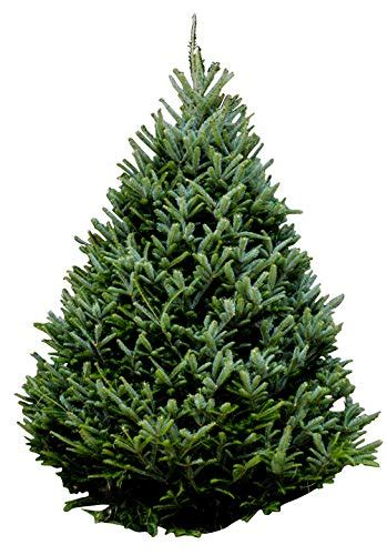 where can you buy a real christmas tree in palm coast take five a day 187 archive 187 o tannenbaum you can buy your live tree from