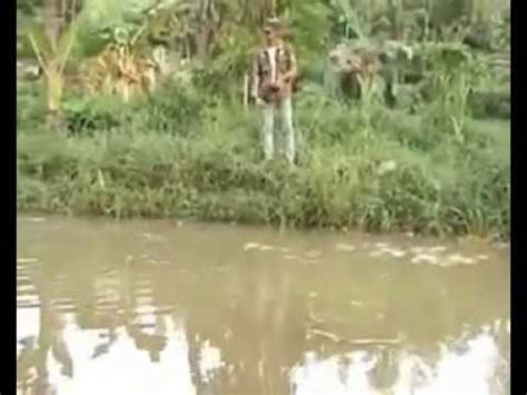 Bibit Lele Sangkuriang Banyuwangi matahari sakti acara tv pelangi desa perikanan part 1