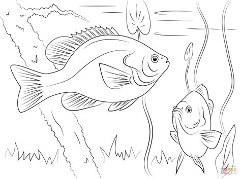 sunfish coloring page redear sunfish coloring page free printable coloring pages