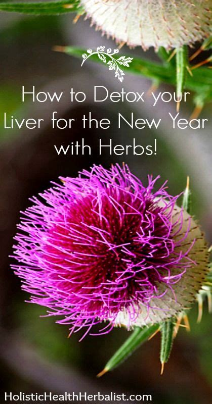 What Herbs Detox Your Liver by How To Detox Your Liver For The New Year With Herbs