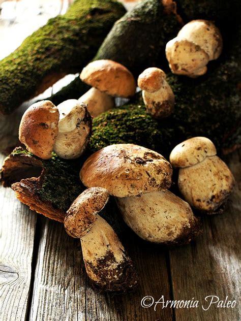 funghi freschi come cucinarli funghi porcini trifolati