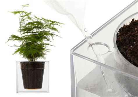 Water Planter by Boskke Clear Cube Self Watering Planter The Green