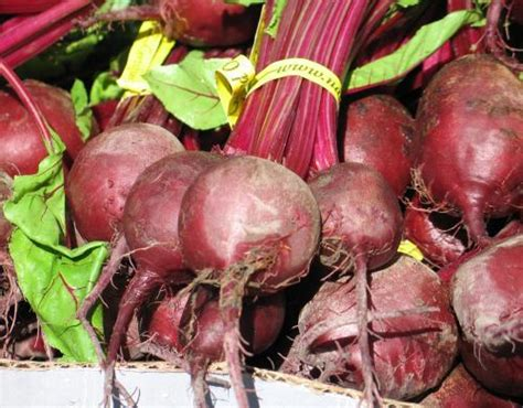 colored root vegetable beets cooking series a z with ssg sadler part 3 msu