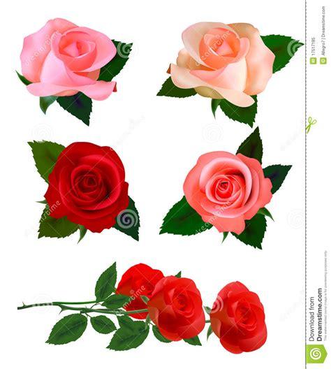 imagenes bonitas grandes jogo grande do rosas bonitas vetor foto de stock royalty