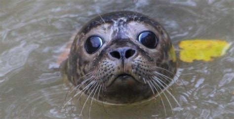 seal facts seal rescue ireland