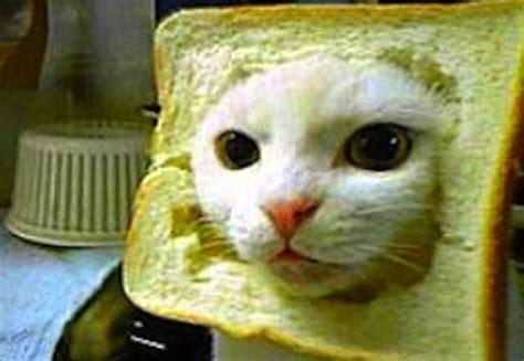 Cat Breading Meme - 15 best cat memes ever