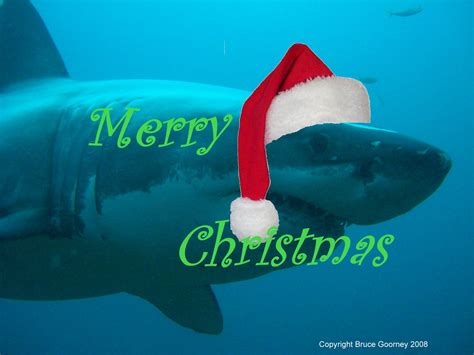 newest kid fish for christmas shark white shark conservation trust conservation through research understanding and education page 4