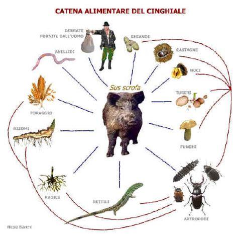 catena alimentare degli animali la catena alimentare degli animali 28 images gli