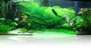 Guide To Aquascaping Setting Up A Higher Tech Planted Tank Uk Aquatic Plant
