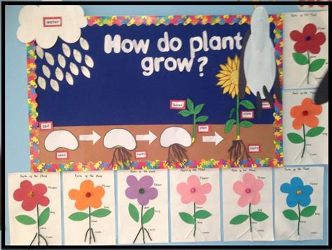 biography bulletin board ideas 316 best continguts plantes prim 224 ria images on pinterest