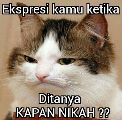 Meme Kucing - gambar foto meme lucu kucing terbaru september 2016