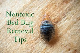 ways to eliminate bed bugs the healthy home