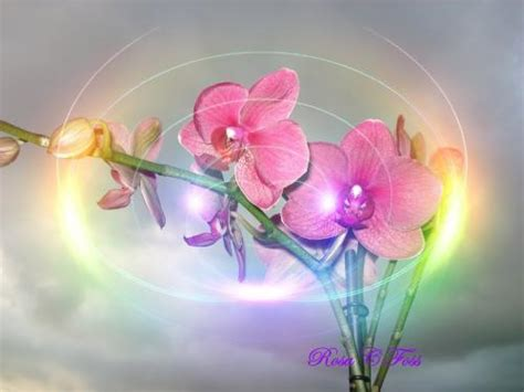 fiori fantastici fiori fantastici sfondi desktop 10455