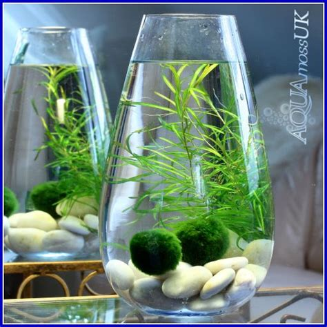 Ikea Tall Glass Vase Best 25 Indoor Water Garden Ideas On Pinterest Water