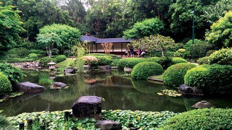 brisbane botanic gardens mount coot tha  traveler