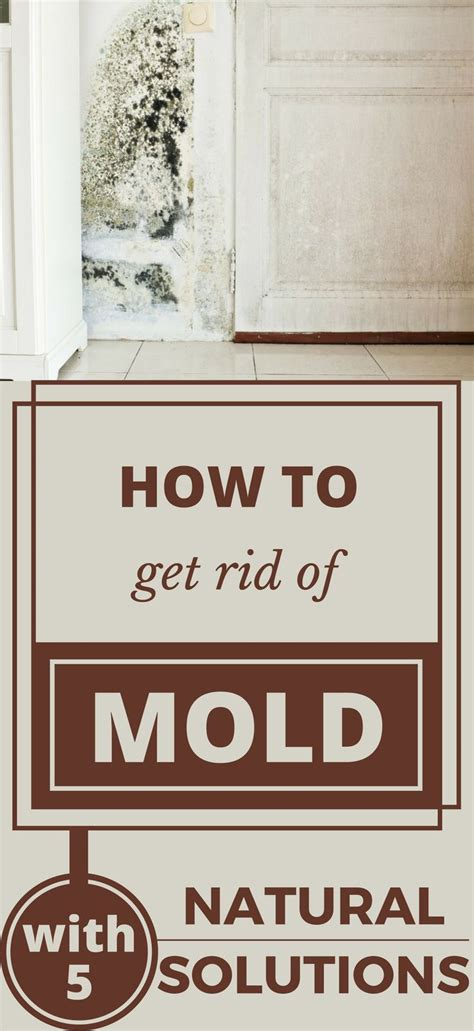 how to get rid of mold on the bathroom ceiling 1047 best house cleaning images on pinterest cleaning