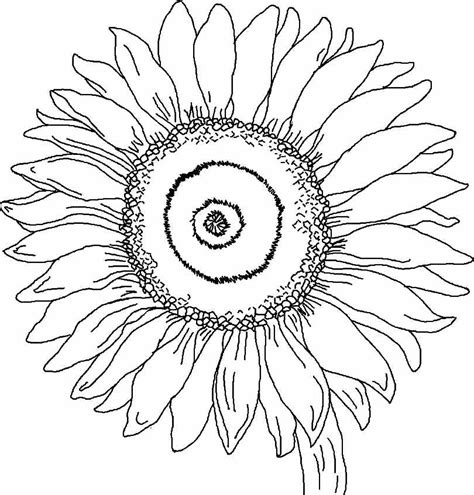 coloring pages of sunflowers coloring home