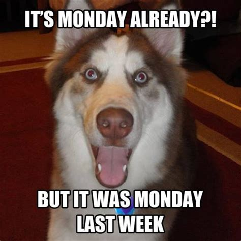 Funny Monday Morning Memes - monday again really funny memes pinterest mondays