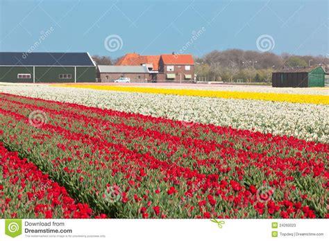 ci di fiori in olanda giacimento di fiori multicolore in olanda immagine stock
