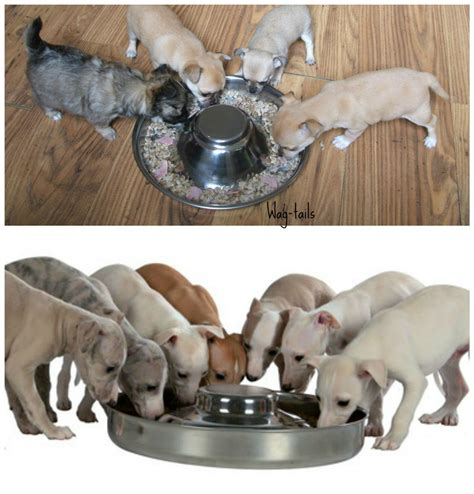puppy weaning food 1 trixie silver stainless steel weaning litter bowl dish feeder food puppy bowl ebay