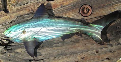 baby shark metal shark abstract metal wall art sculpture by robert blackwell