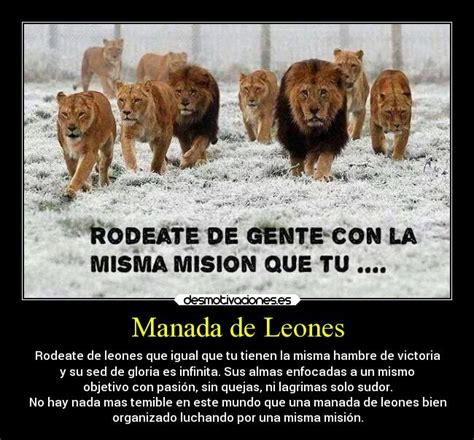 imagenes d leones con frases fotos de leones con frases imagui