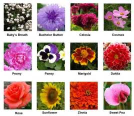 Study Of Flower Colours In The Garden Best Cut Flowers To Grow To Backyard Jazzed Up Gardens Backyards