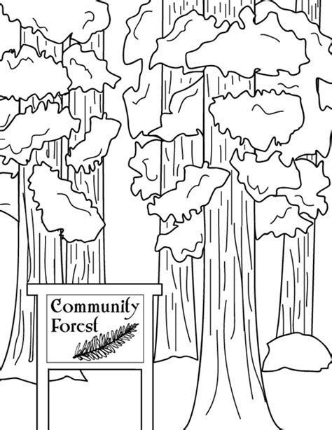 coloring page of redwood tree community forrest sequoia trees california state trees to