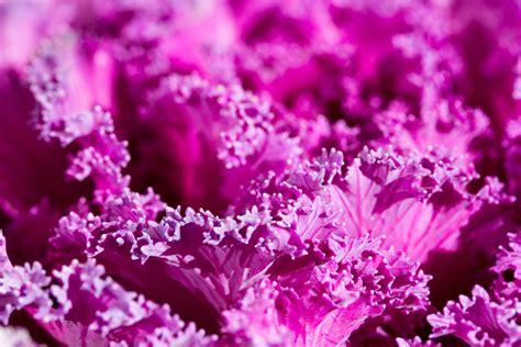wallpaper bunga berwarna ungu gambar cabang mekar abstrak menanam ungu daun bunga