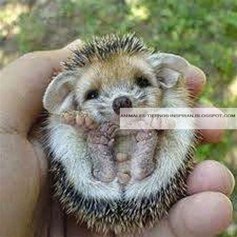 imagenes de animales pequeños animales tiernos inspiran im 225 genes de animales bebes peque 241 os