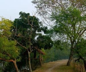 Forest Mba Concentrations by Sundarbans Industrial Visit Industrial Tours Visit