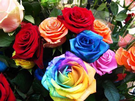 imagenes rosas de todos los colores banco de im 225 genes para ver disfrutar y compartir