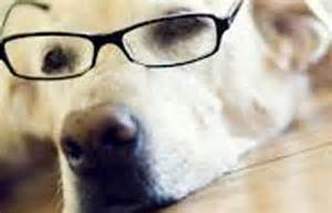 dogs see color research study shows that dogs see in various colors