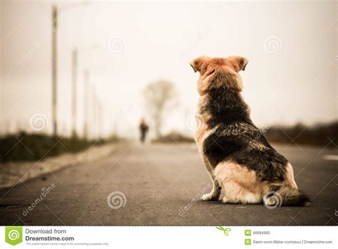 waiting for owner waiting in the stock photo image of animal 46684990