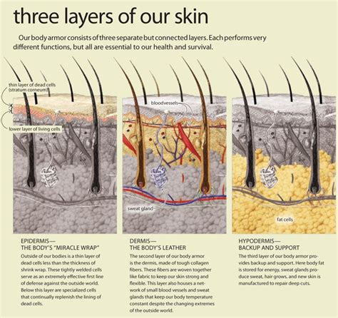 tattoo ink layer of skin 171 best images about a p on pinterest physiology