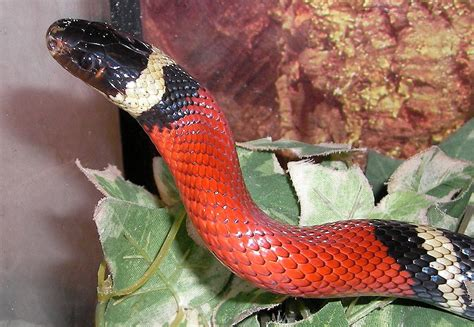 colorful snakes abcs of animal world world s most beautiful colorful and