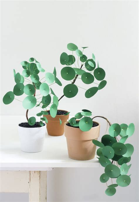 Paper Plant - 17 best ideas about money plant on