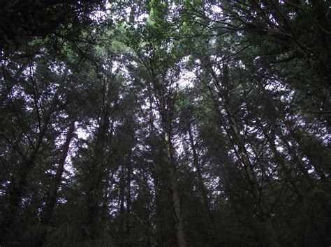 quanti sono i cavalieri della tavola rotonda la foresta di mago merlino pfg style