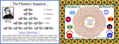 patterns in nature worksheet fibonacci worksheet free worksheets library download and
