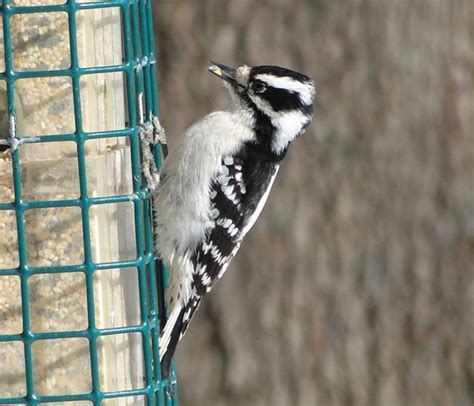 fall birdseed sale schuylkill center for environmental