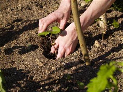 Best Time To Plant Vegetable Gardens Time Vegetable Garden