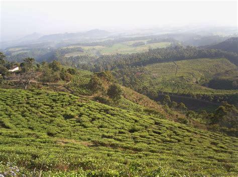 Teh Hijau Jamus wisata ngawi di jawa timur dari kebun teh hingga waduk