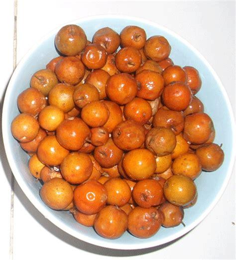 jual biji benih buah bidara laut di lapak kedaibenih