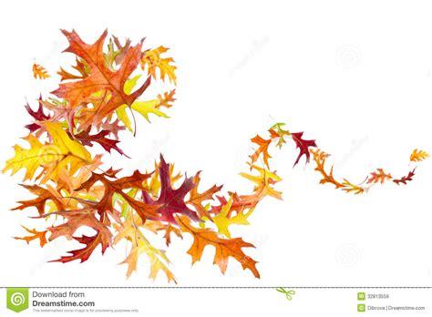 Listi Midi autumn leaves swirl image stock image du blanc feuillage