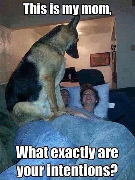 why do dogs hump their bed 676 best animal quotes images on pinterest animal quotes