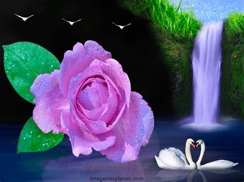 imagenes de rosas hermosas con movimiento flores hermosas con movimiento imagui